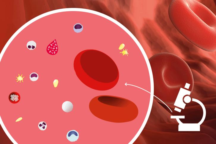 Was das Blut über Ihre Gesundheit verrät