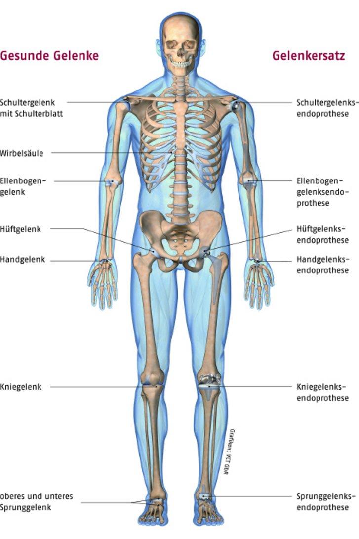 Schön Menschliche Gelenke Fotos - Menschliche Anatomie Bilder ...