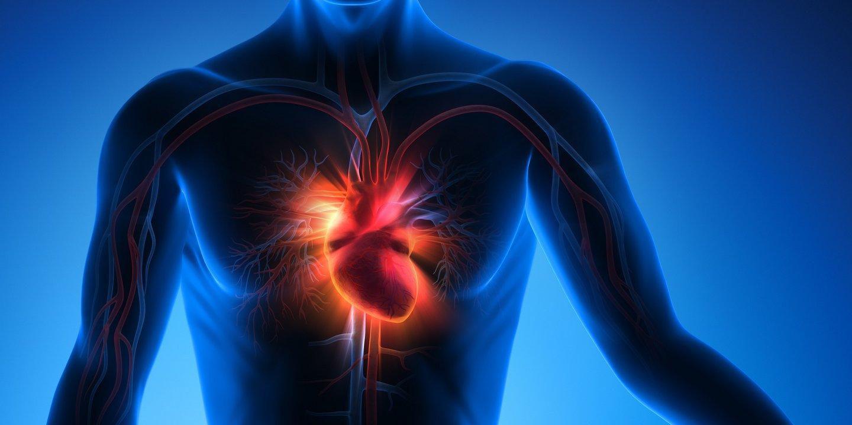 Kein Motor Ohne Ventile Funktion Und Erkrankungen Der Herzklappen