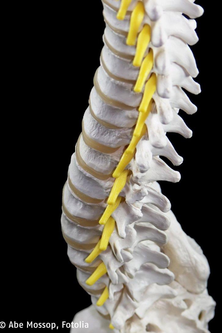 Rückenschmerzen - HELIOS Klinikum Bad Saarow