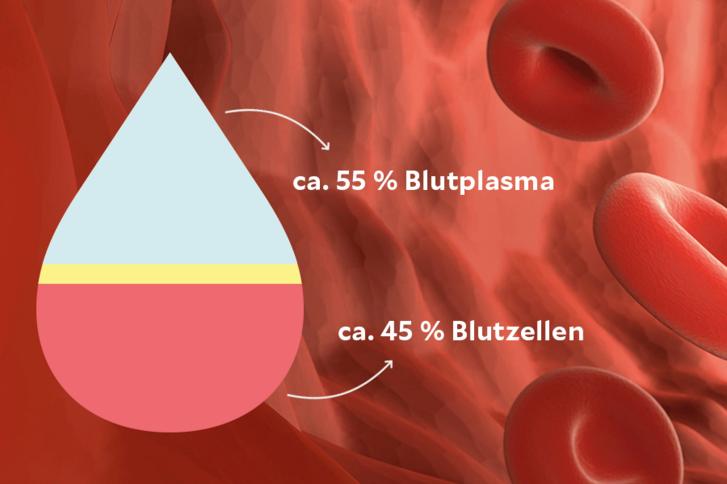 Entjungfern Wie Viel Blut